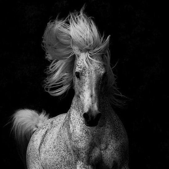 4-horse